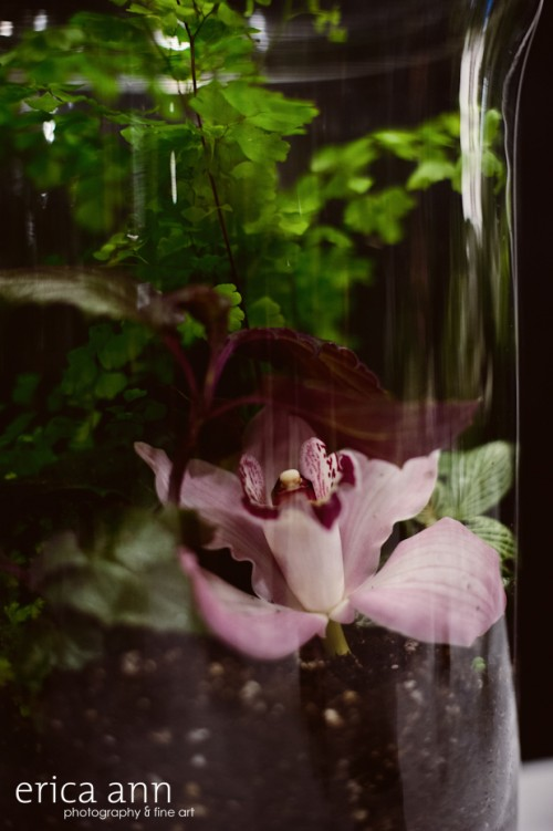 Terrarium with orchid
