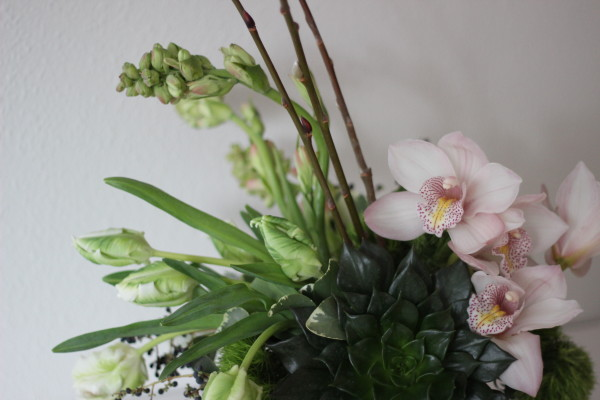 succulent and orchid arrangement by anastasia ehlers