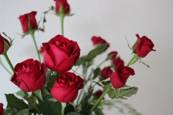 red roses by anastasia ehlers