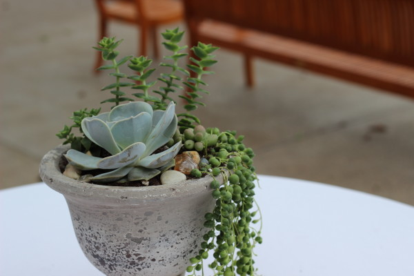 potted succulent arrangement by anastasia floral design