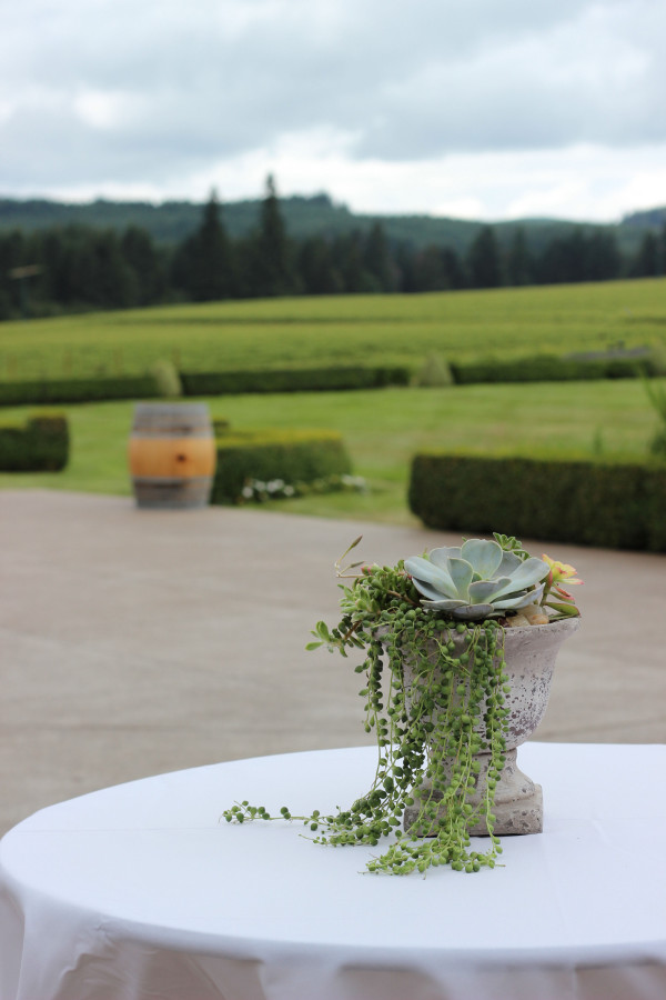succulent planter with string of pearls by anastasia floral design